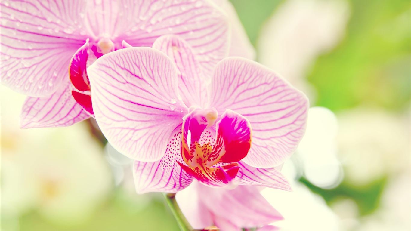Orchidee Fleur Desktop Fleurs Fonds D Ecran Apercu