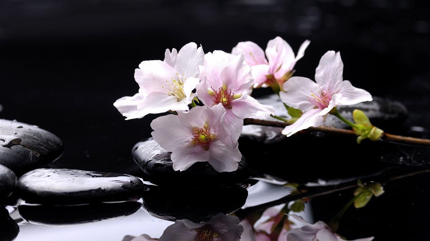 Zen Stones Flowers Fondos De Escritorio Avance 10wallpapercom
