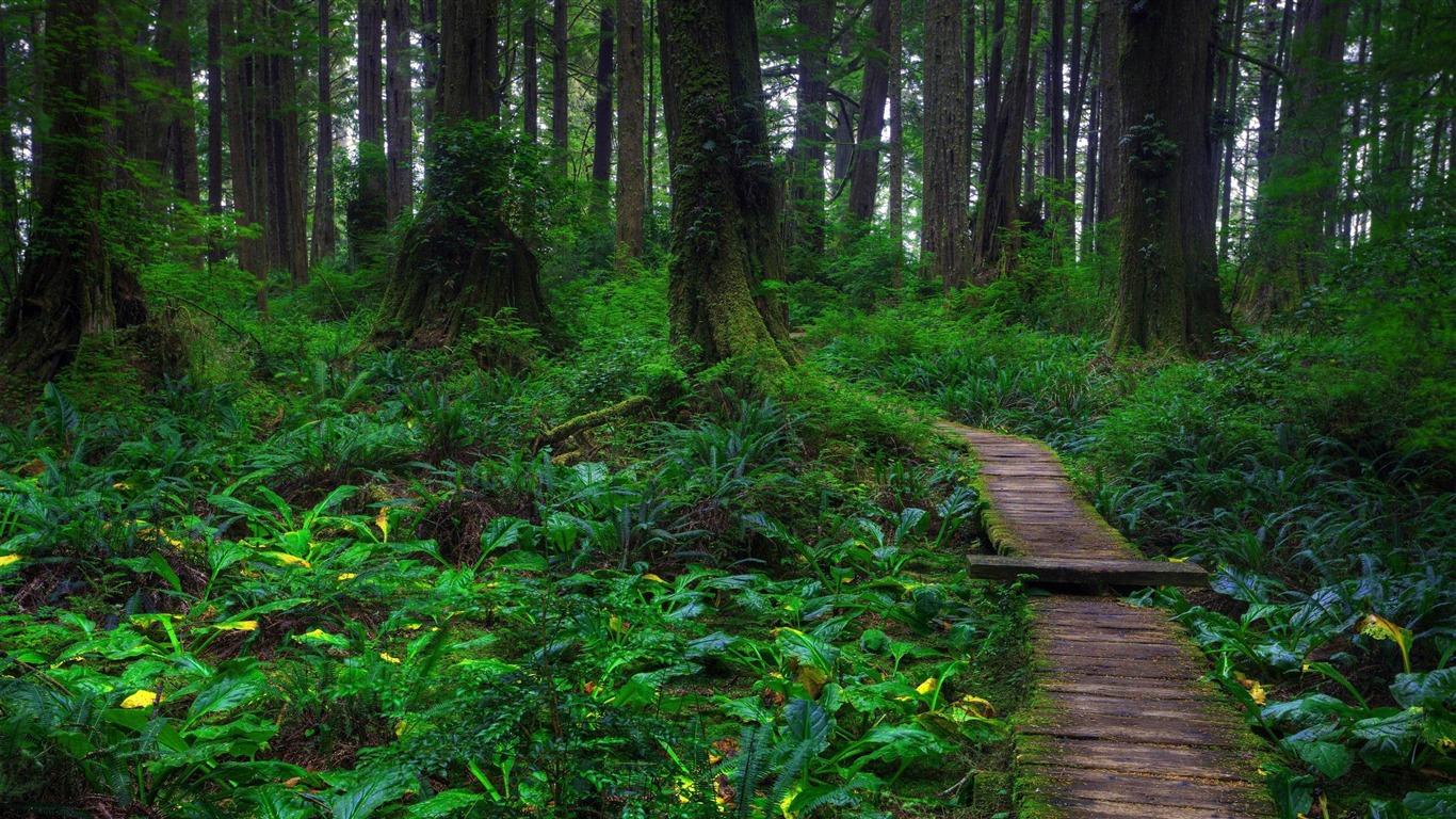 美しい森の小道 森林の風景の壁紙プレビュー 10wallpaper Com
