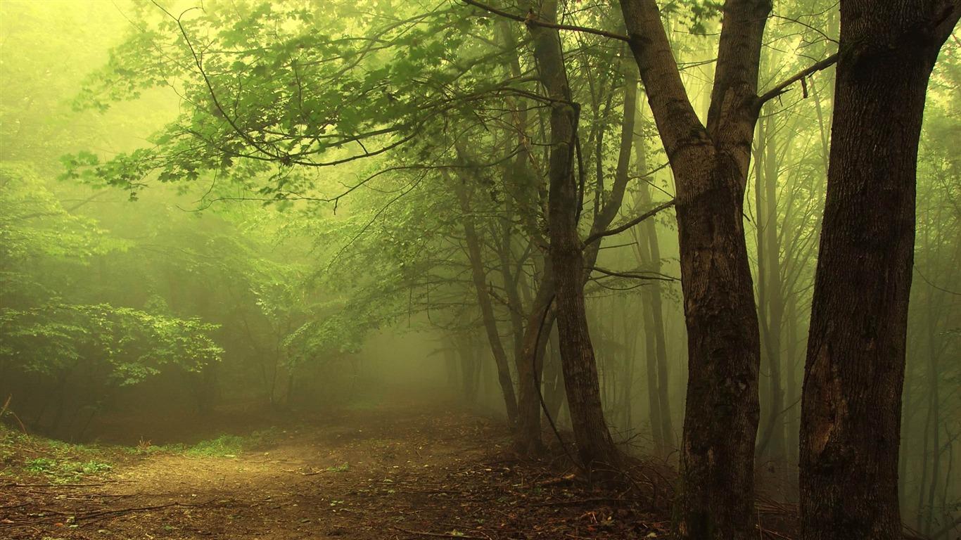 森の霧 森林の風景の壁紙プレビュー 10wallpaper Com
