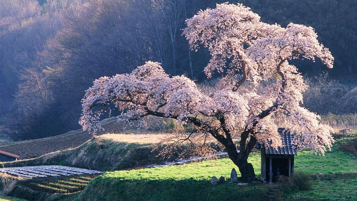 22+ Wallpaper Spring Landscape Images Gif