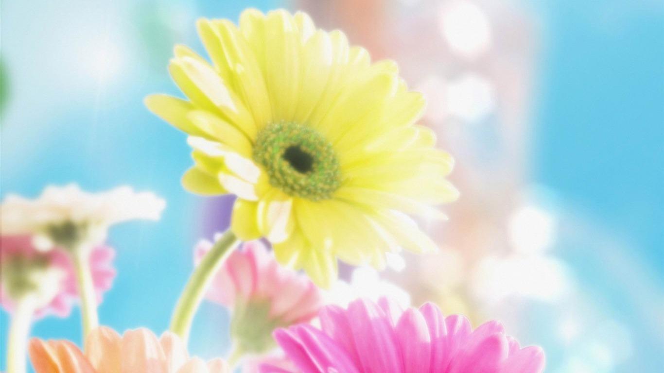 色とりどりの花 春の花壁紙プレビュー 10wallpaper Com