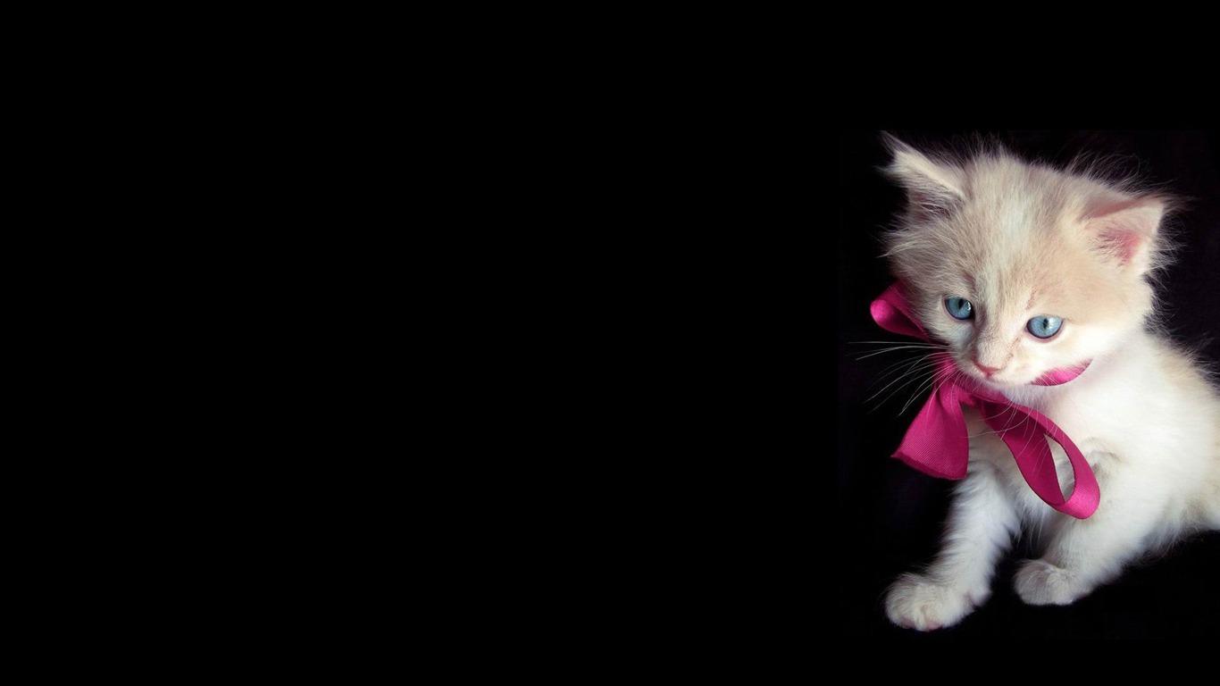 少しキティ-かわいいペットの猫の写真 - 1366x768 壁紙ダウンロード -10wallpaper.com