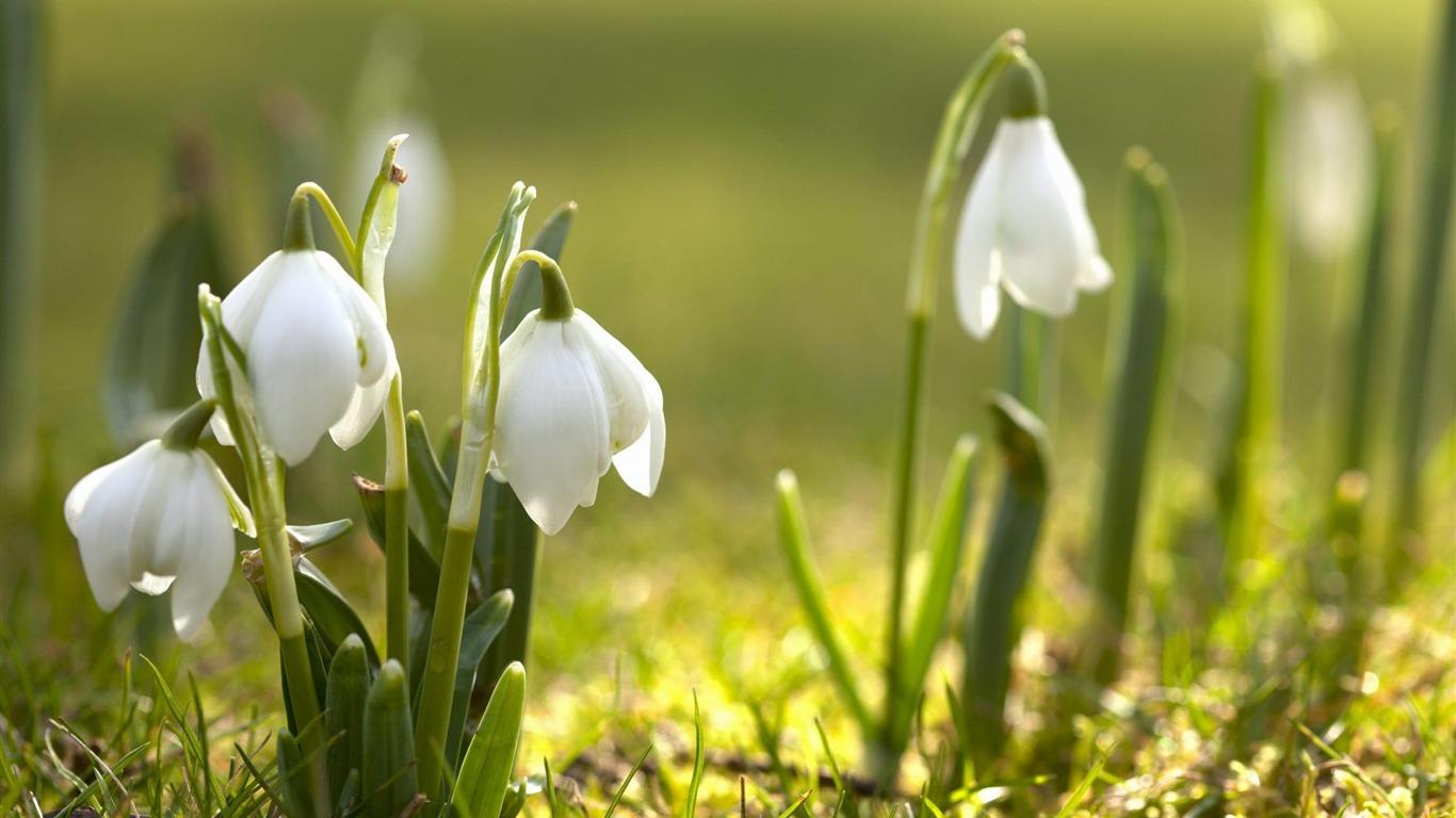 無料の春 花の写真撮影の壁紙プレビュー 10wallpaper Com