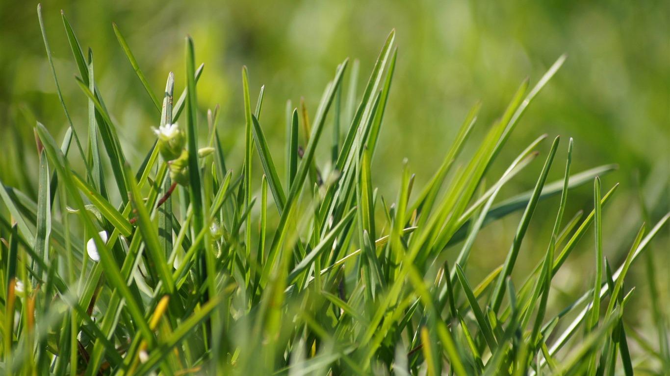 grass macro photography - photo #7