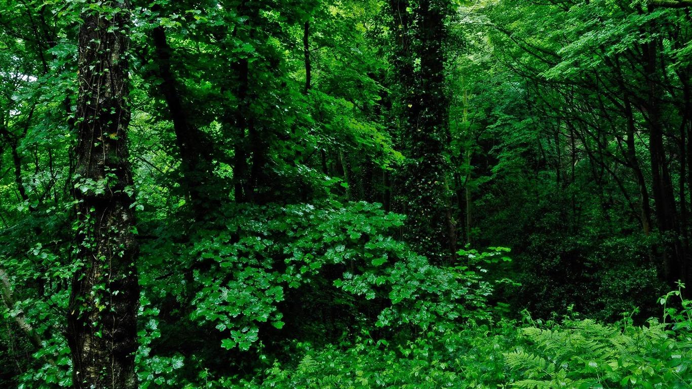 緑の自然 森の風景壁紙プレビュー 10wallpaper Com
