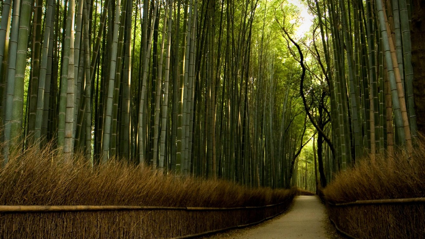 Must see Wallpaper High Quality Forest - bamboo_forest-High_Quality_wallpaper_1366x768  Perfect Image Reference_872748.jpg
