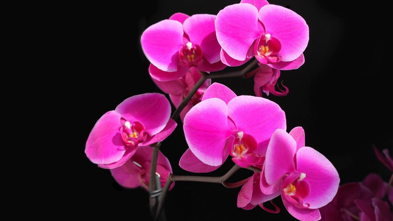 Orchidees Roses Fleurs Fond D Ecran Apercu 10wallpaper Com