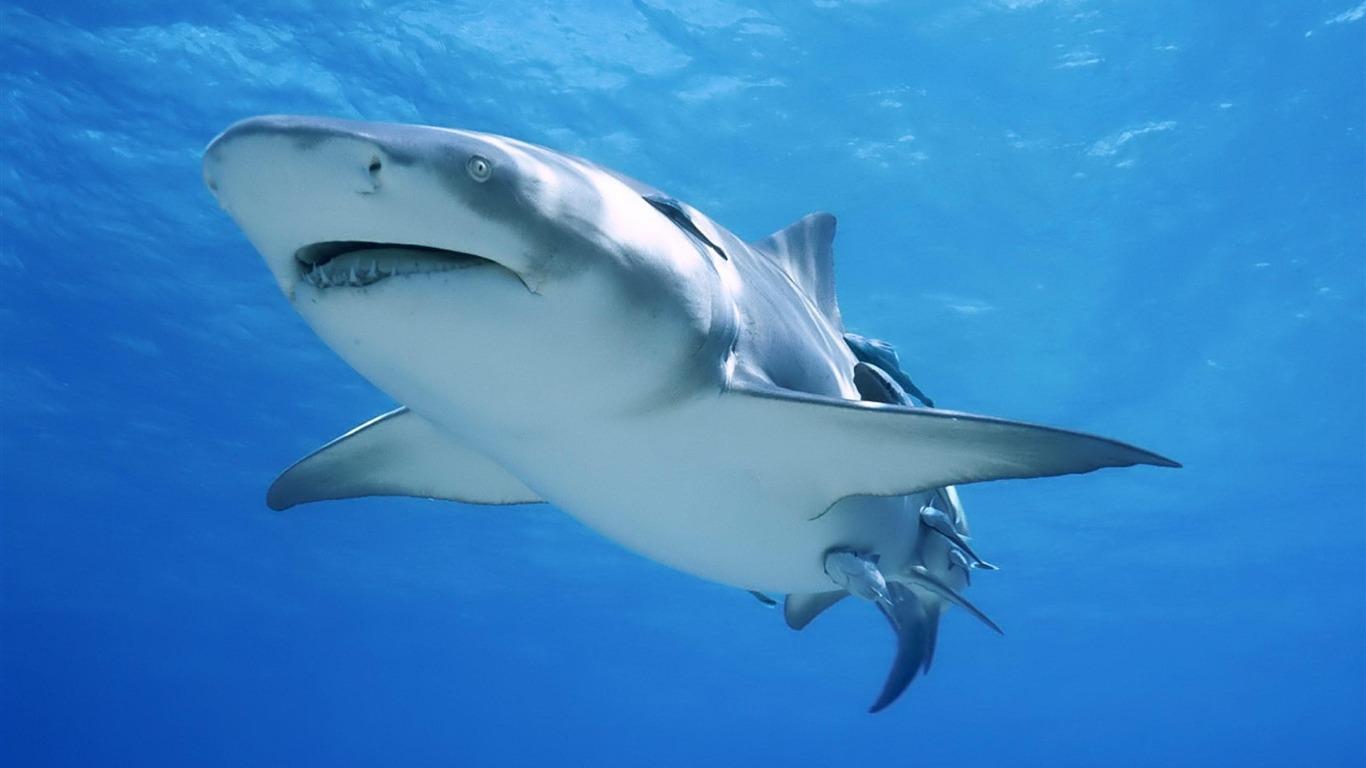 サメの海 動物写真の壁紙プレビュー 10wallpaper Com