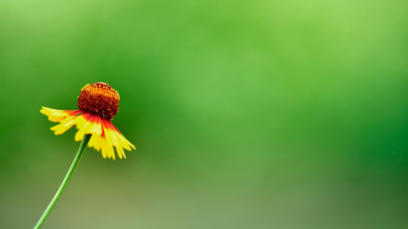 Beautiful_yellow_summer_flowers-Flowers_photography_Wallpaper2012.6.25
