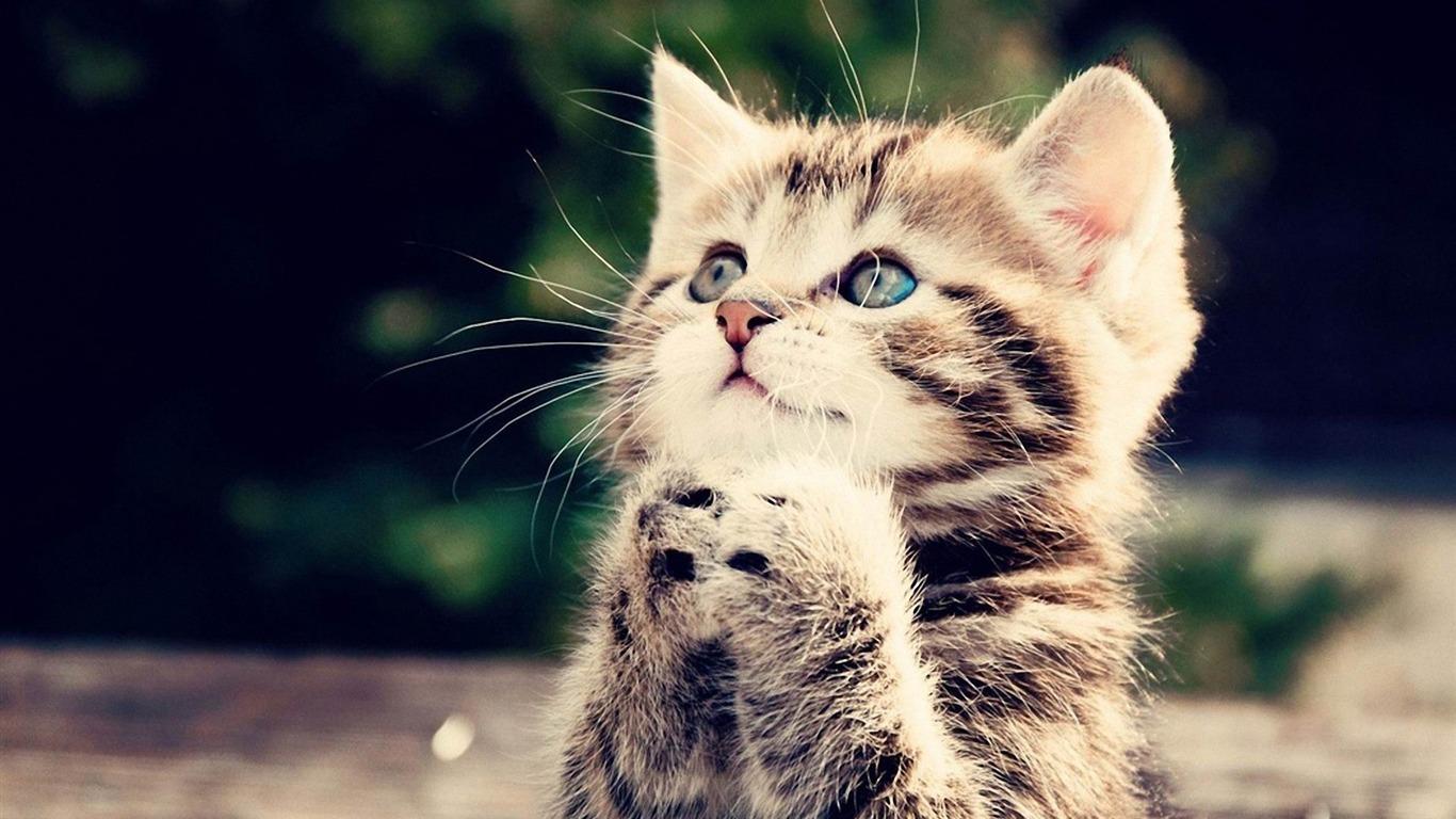 かわいい子猫 猫の写真壁紙プレビュー 10wallpaper Com