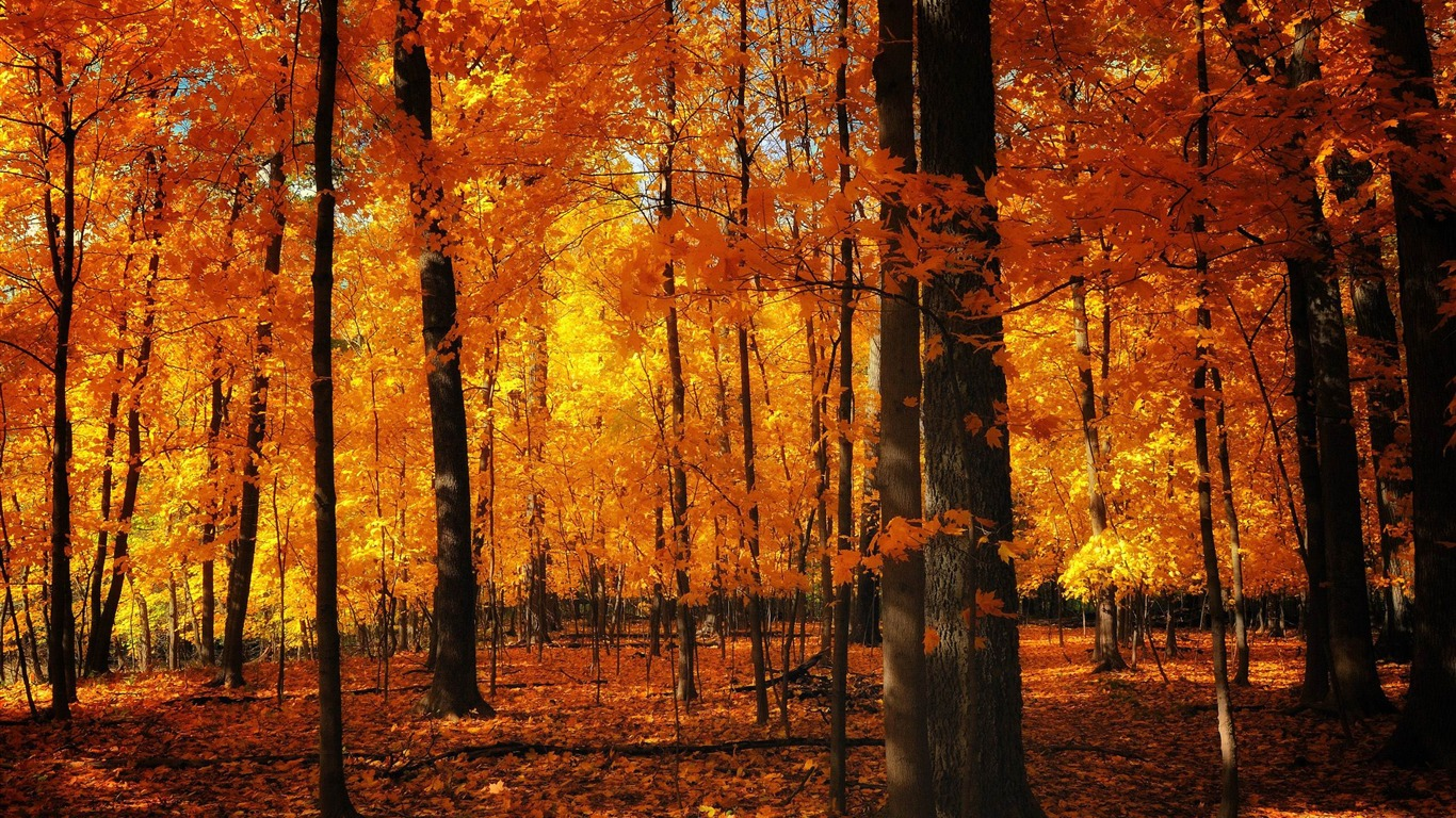 foto de d'orange forêt-Fond d'écran Paysage d'automne Aperçu | 10wallpaper.com