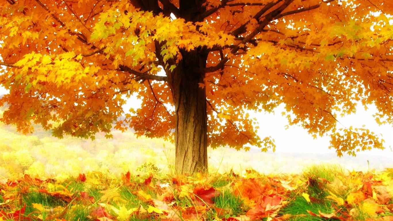 秋の喜び 秋の風景の壁紙プレビュー 10wallpaper Com