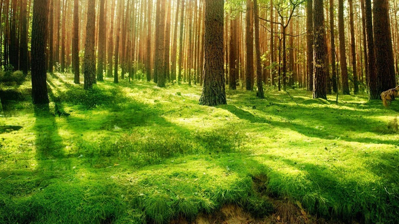 森のデスクトップを介して太陽の光の壁紙プレビュー 10wallpaper Com