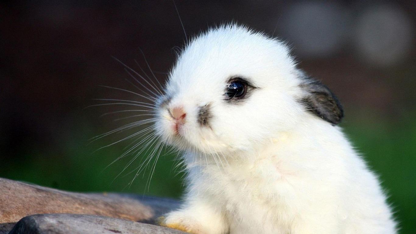 mignon lapin-Fonds d'ecran animaux Aperçu | 10wallpaper.com