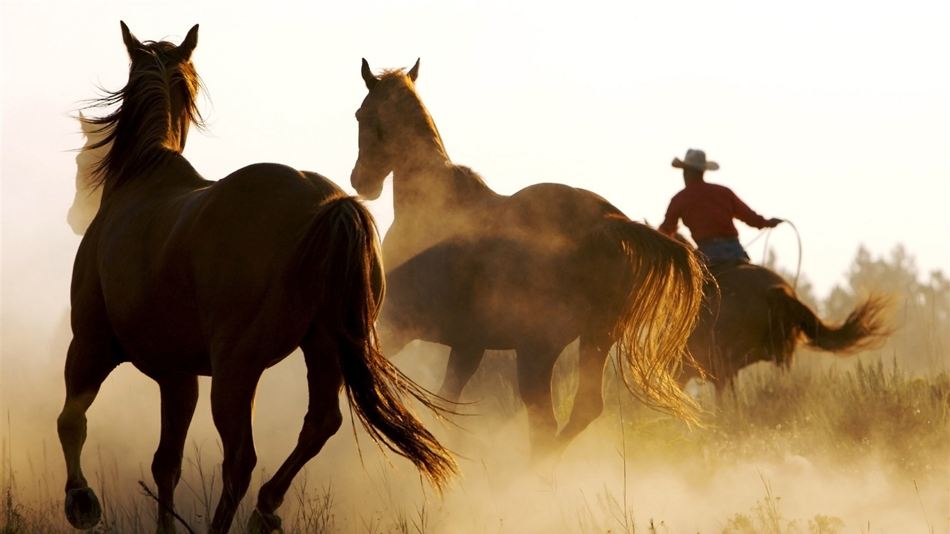wild_horses-Animal_wallpaper2012.7.27