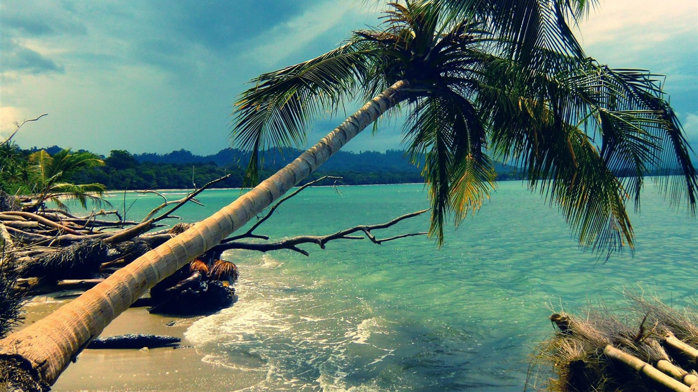 palm_tree_in_storm-Nature_landscape_wallpaper2012.8.14