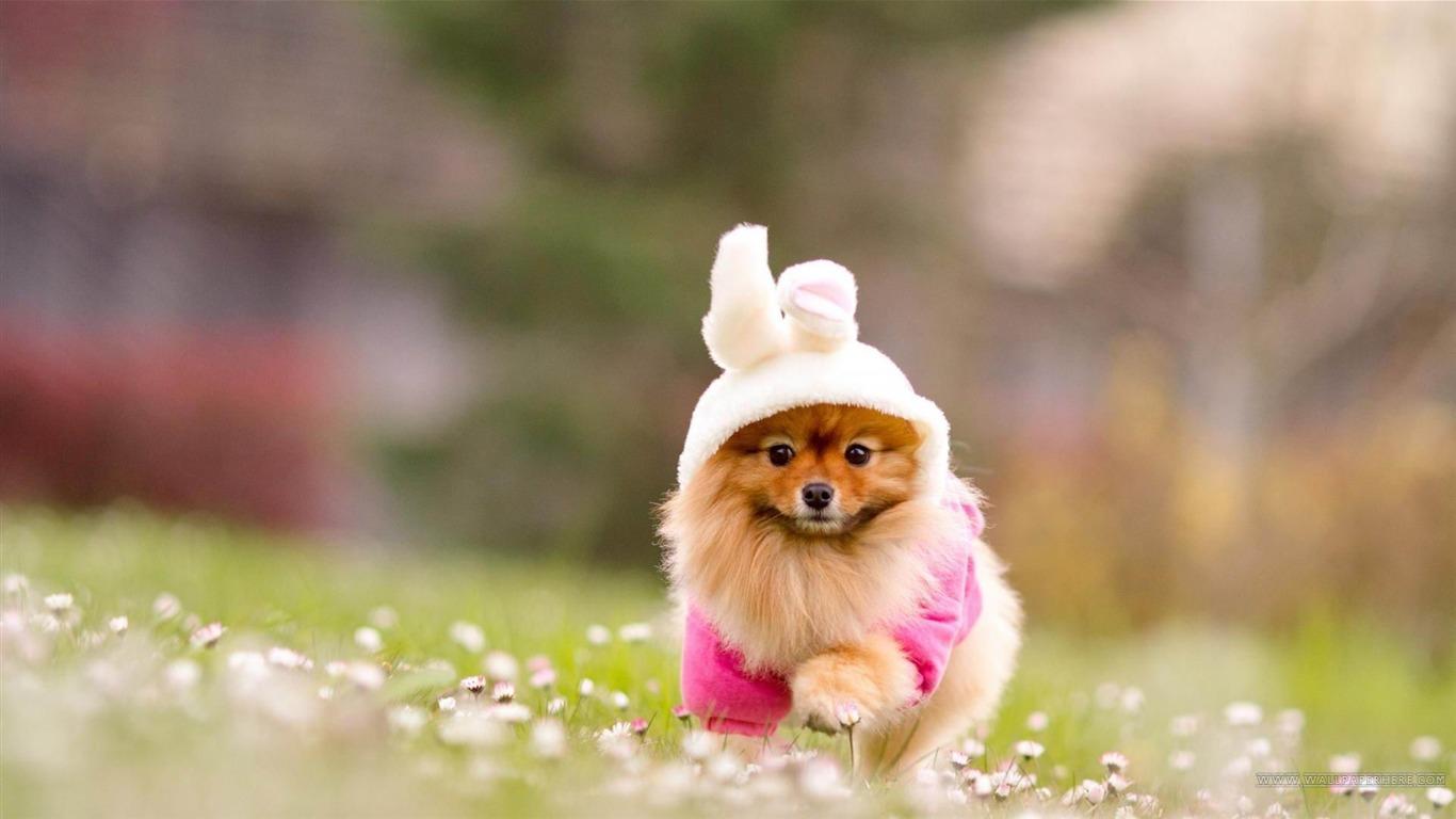 うさぎの着ぐるみのかわいい子犬