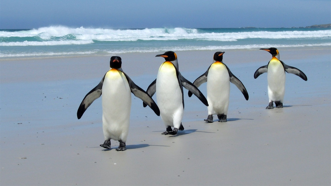 Penguins on the beach-wild animals photo wallpaper Preview | 10wallpaper.com
