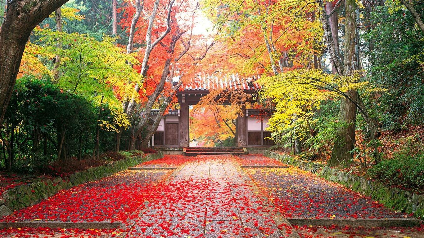日本の秋 黄金の秋の風景の壁紙プレビュー 10wallpaper Com