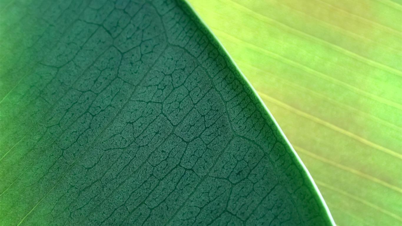 Hojas Verdes Mac Os X Mountain Lion Hd Wallpapers Avance