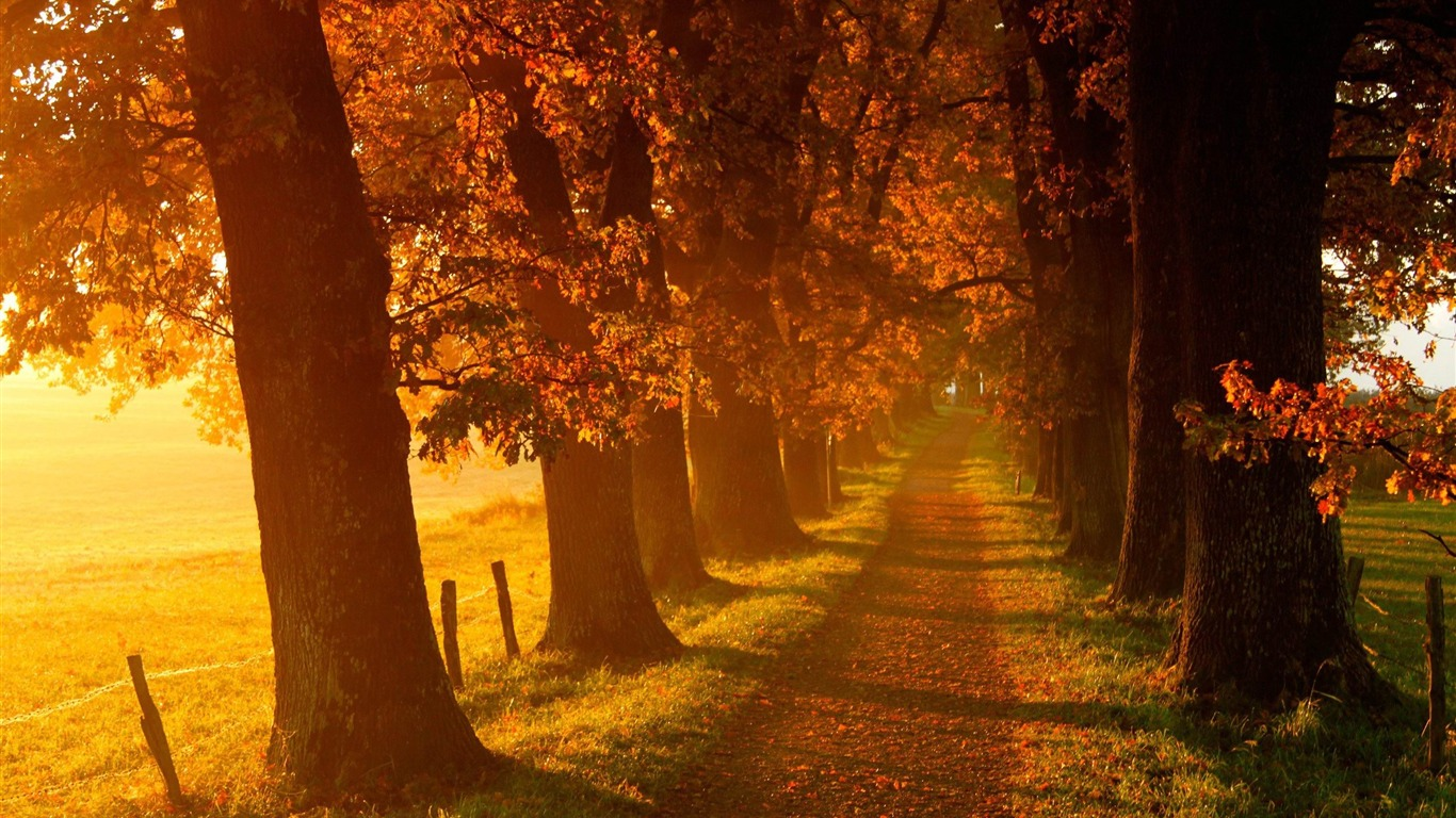 Jungle_walk-autumn_landscape_Wallpaper