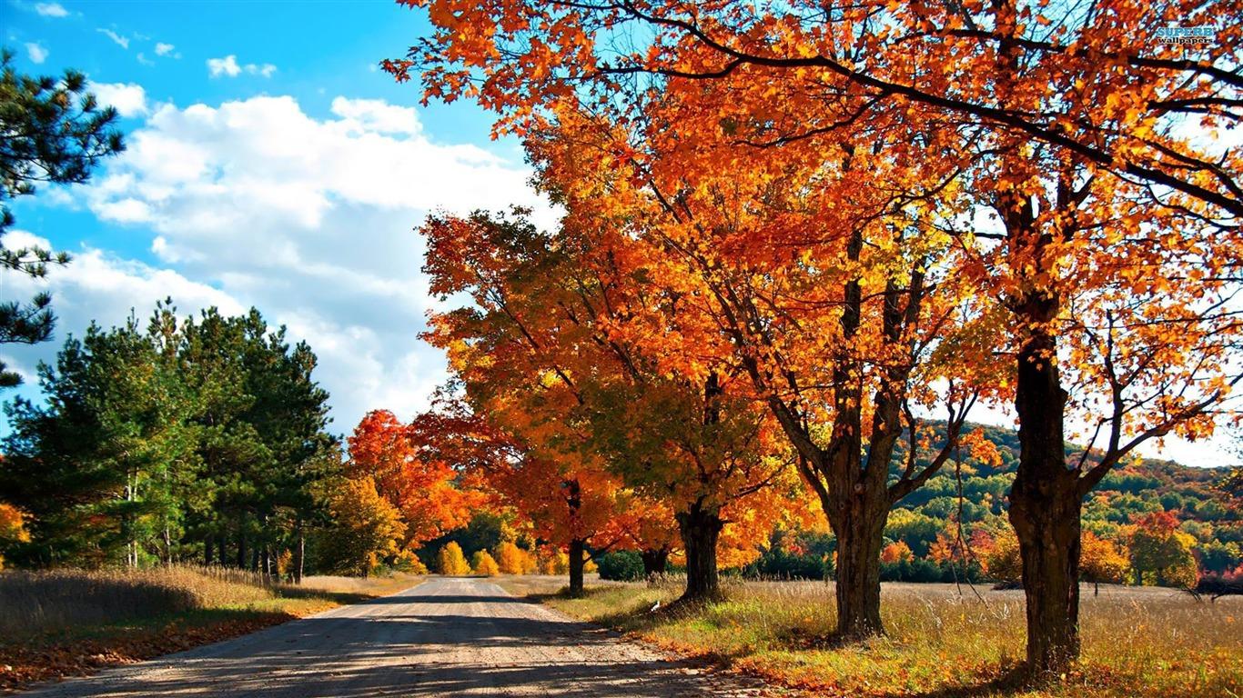 田舎の道路 黄金の秋の風景の壁紙プレビュー 10wallpaper Com