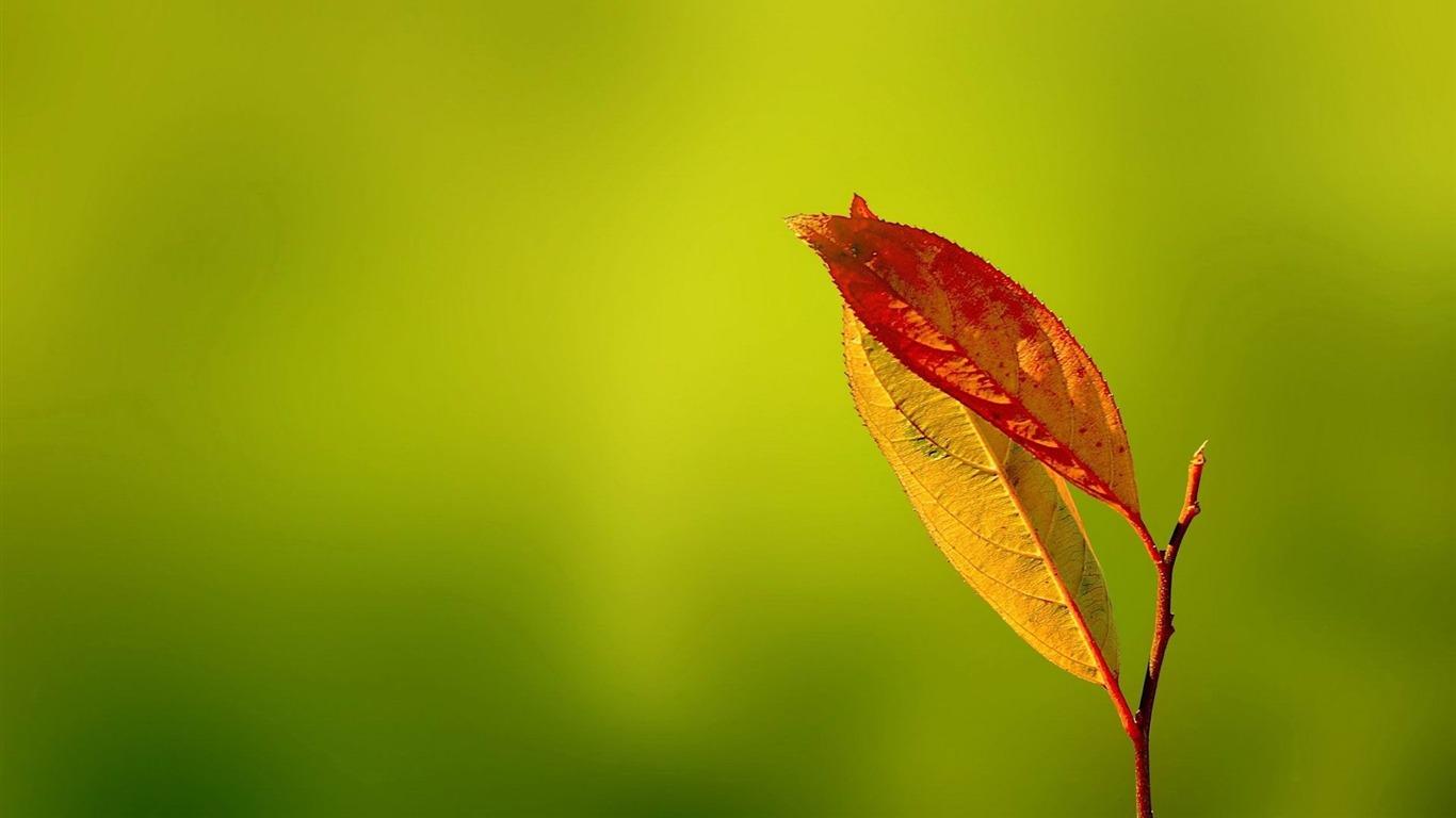 Feuilles rouges plantes photographie fond d 39 cran aper u - Plante a feuilles rouges ...