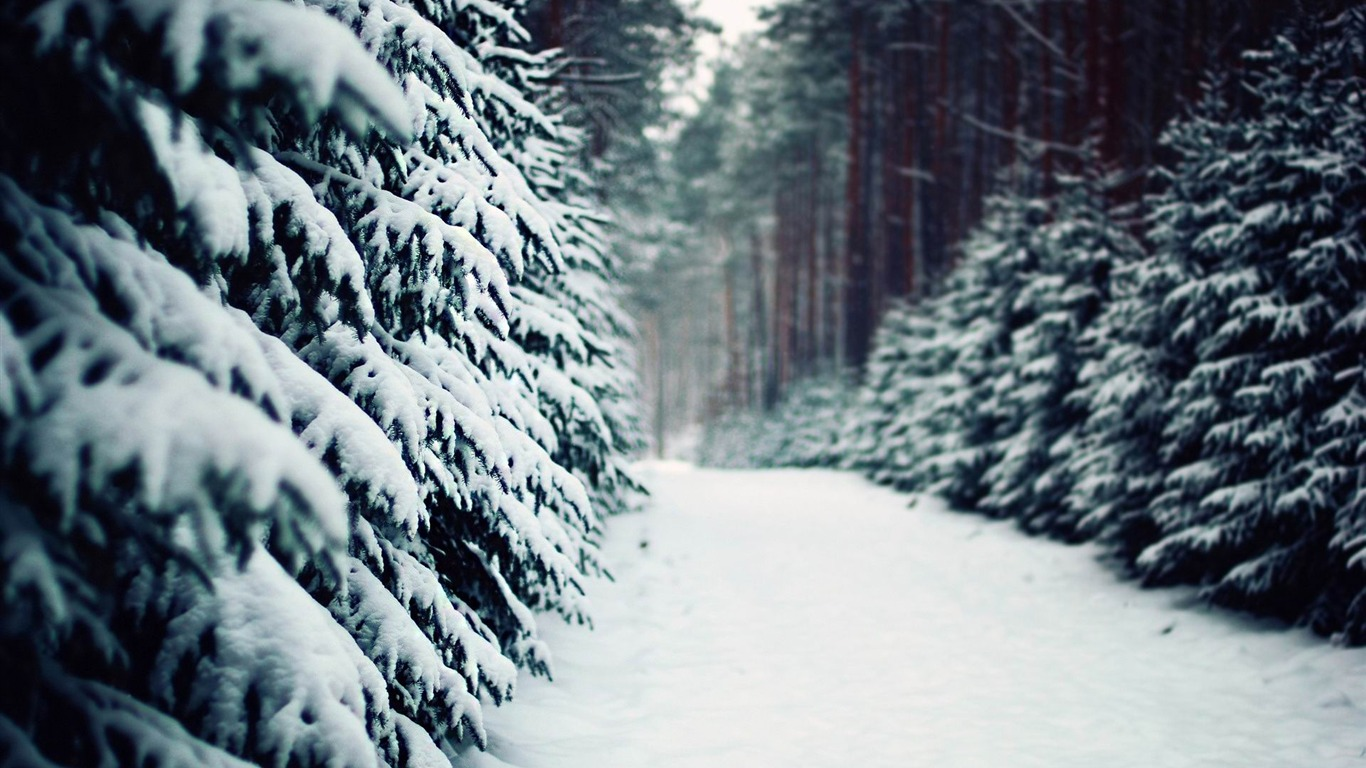 Snow Road In The Forest Winter Scenery HD Wallpaper Preview