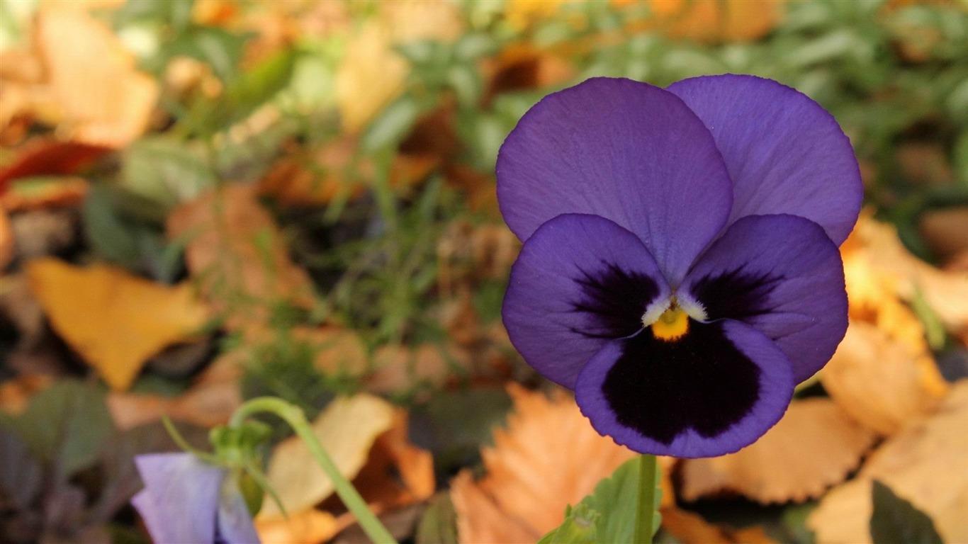 L Automne Et Ses Fleurs Fleurs Et Plantes Fond D écran