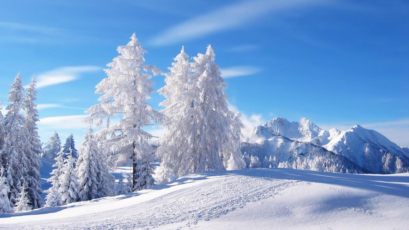 Neige Arbres Blancs Fond D Ecran Paysages D Hiver Apercu