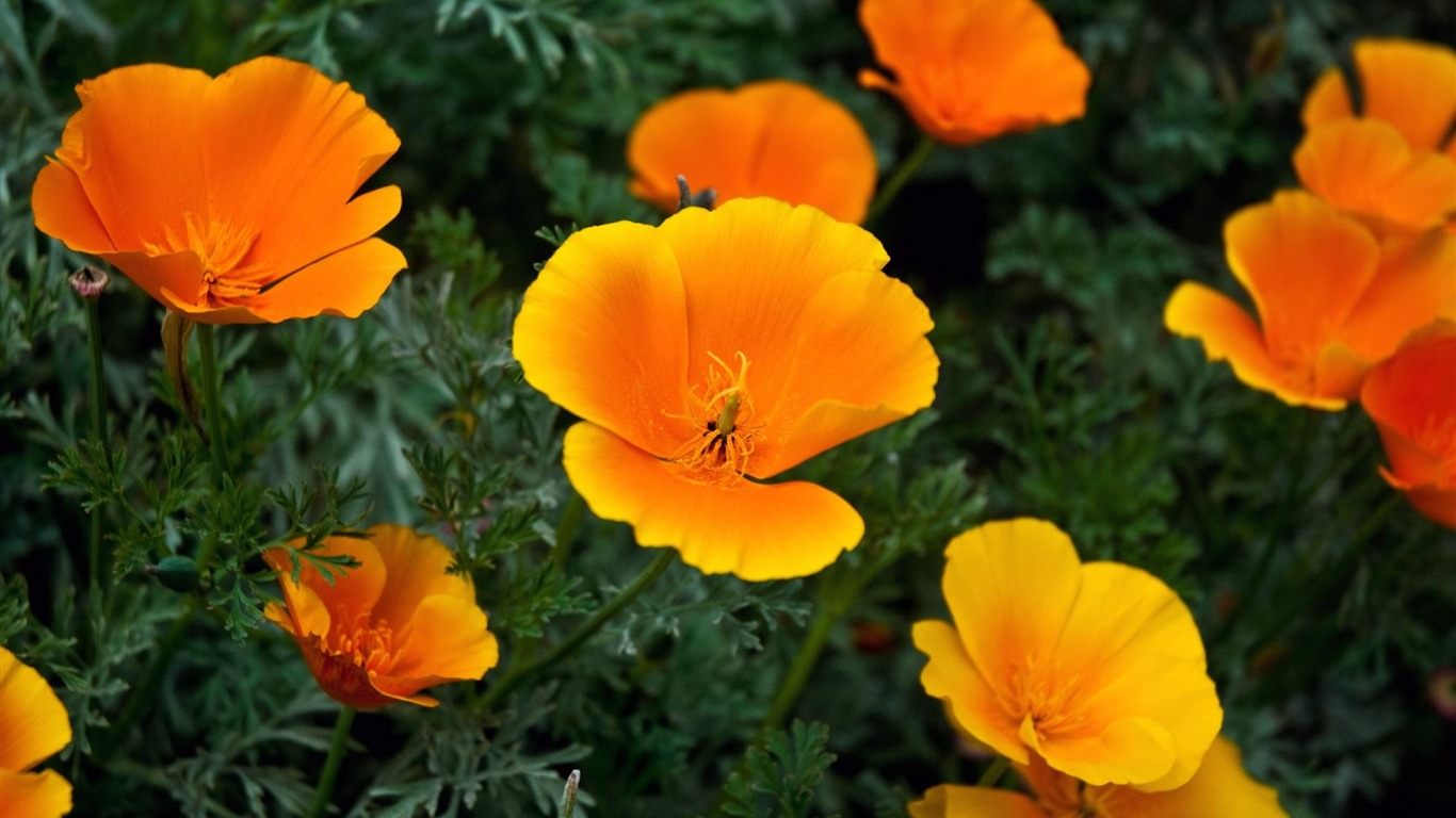orange_yellow_flower-Flowers_Widescreen_Wallpaper