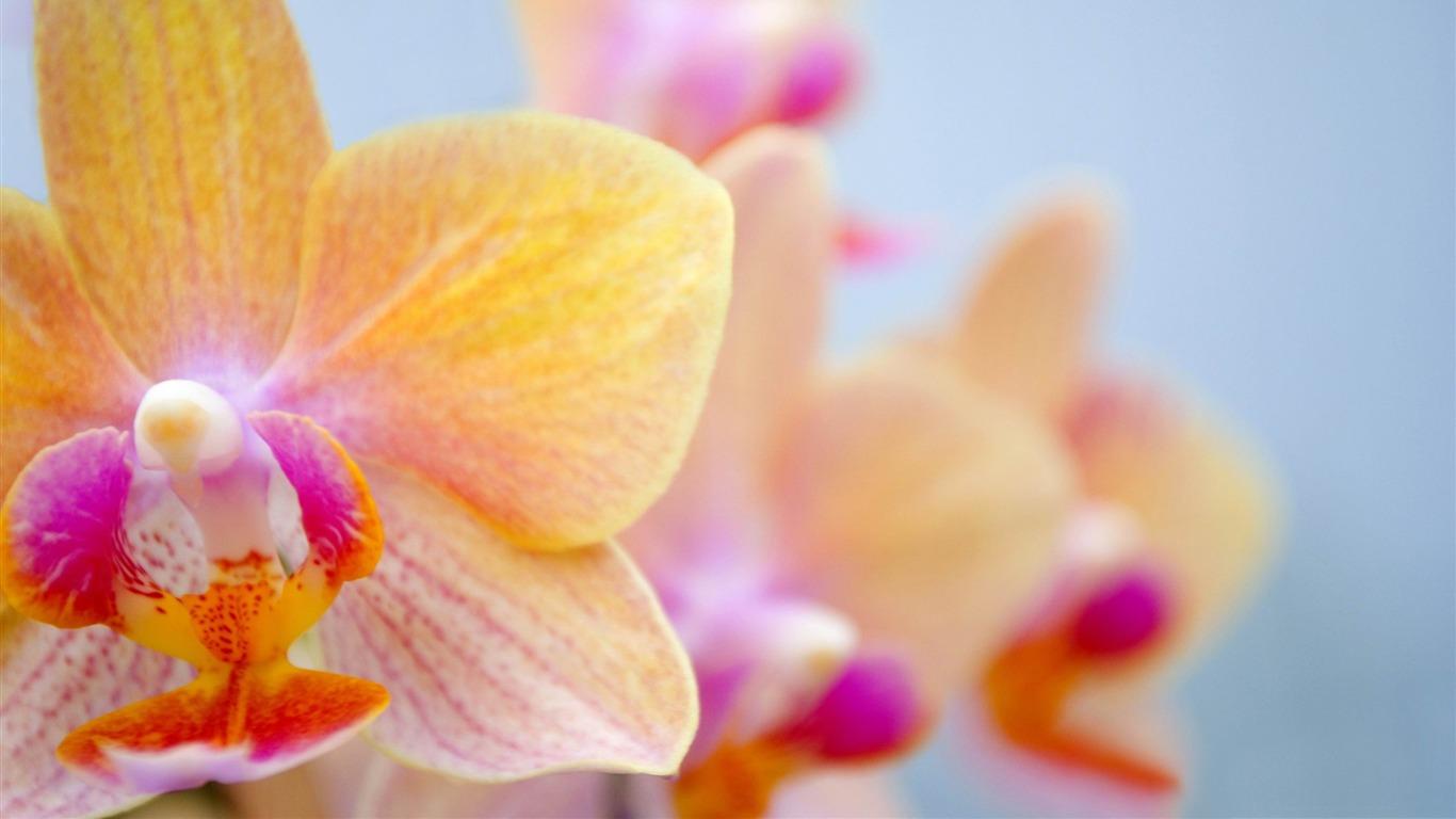 Fleurs D Orchidee 2012 Fleurs Beau Fond D Ecran Apercu