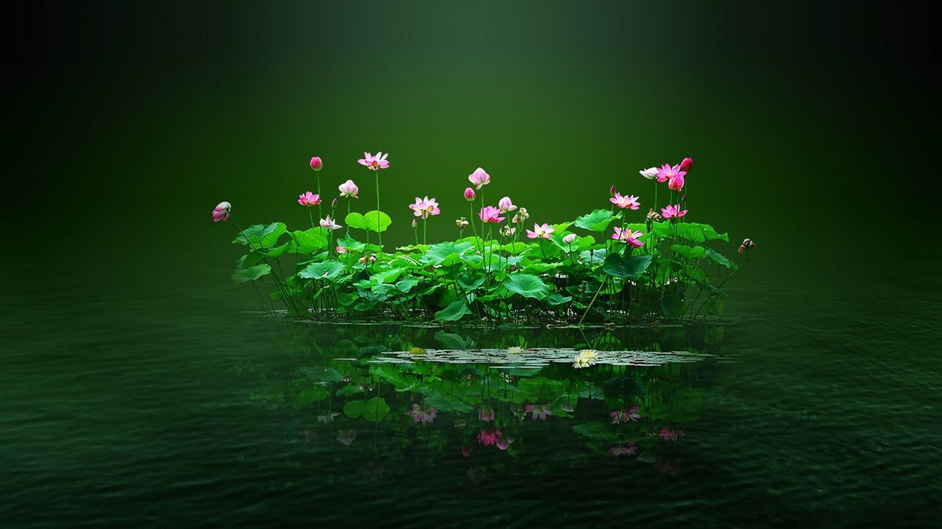 swamp_flowers_and_water-beautiful_flowers_Picture_wallpaper2013.1.6