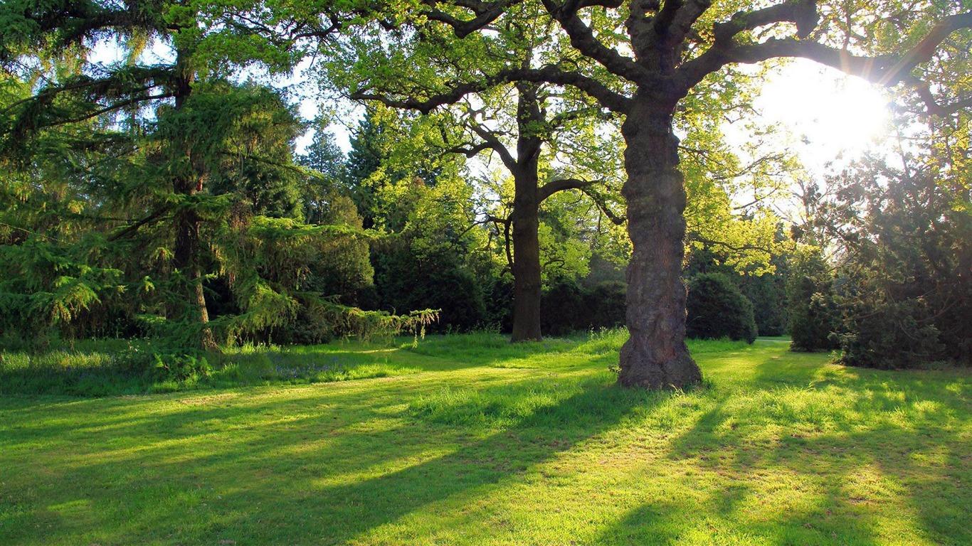 Oak Tree In The Park Natural Scenery Widescreen Wallpaper