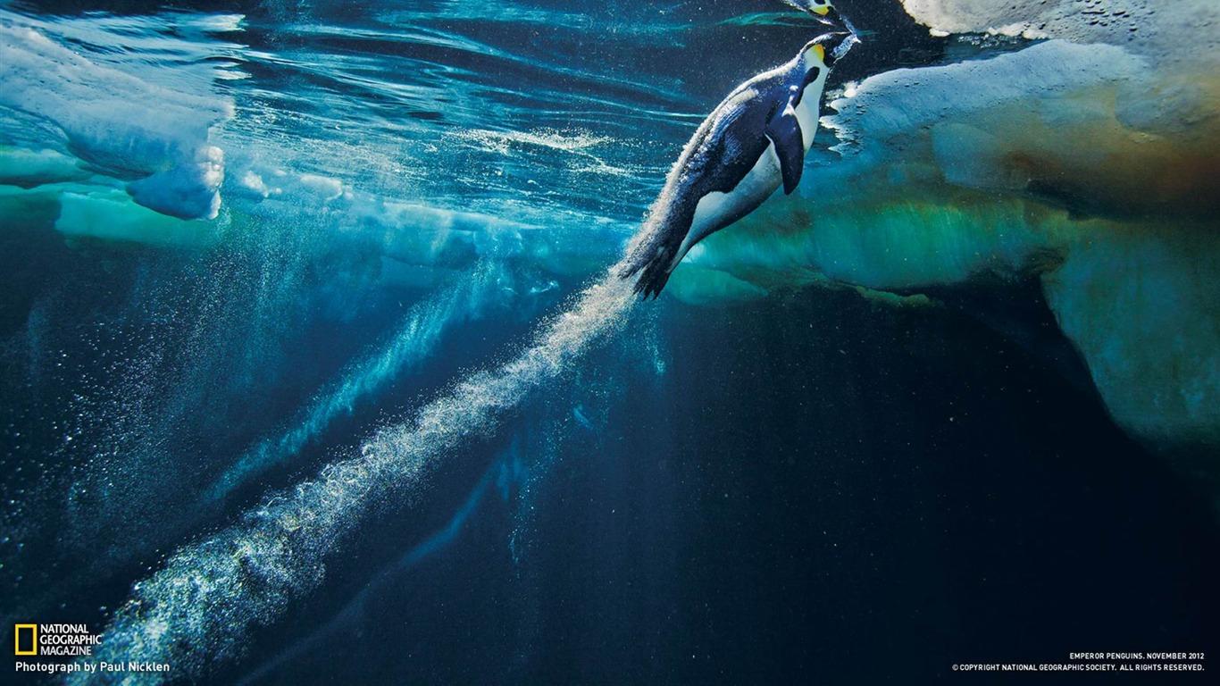 皇帝ペンギン南極 ナショナルジオグラフィック写真の壁紙プレビュー 10wallpaper Com