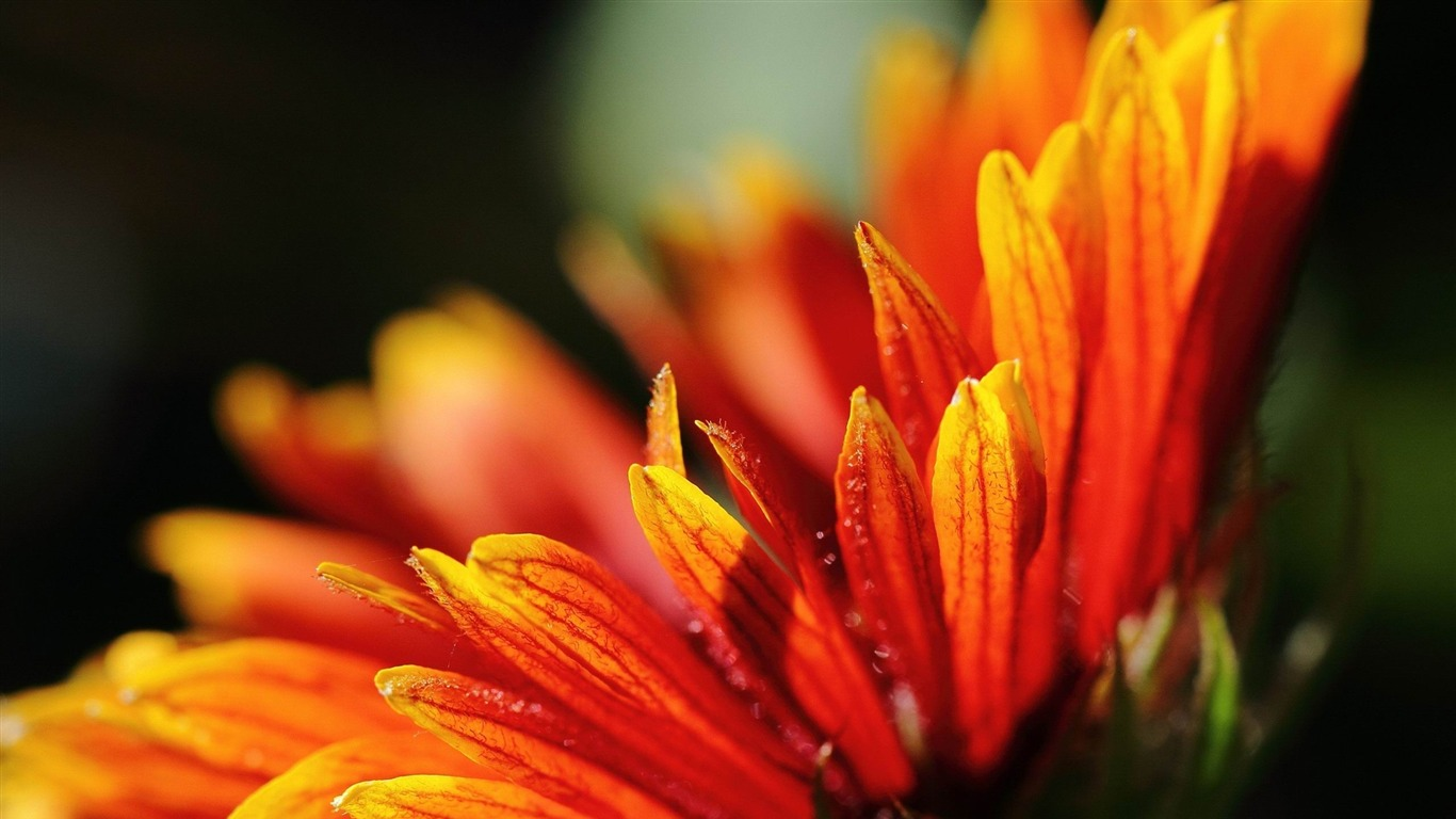 flower_orange-Plant_flowers_macro_Wallpaper2013.3.25