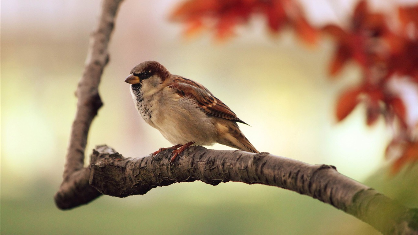 sparrow-Animal_world_photography_wallpapers2013.4.9