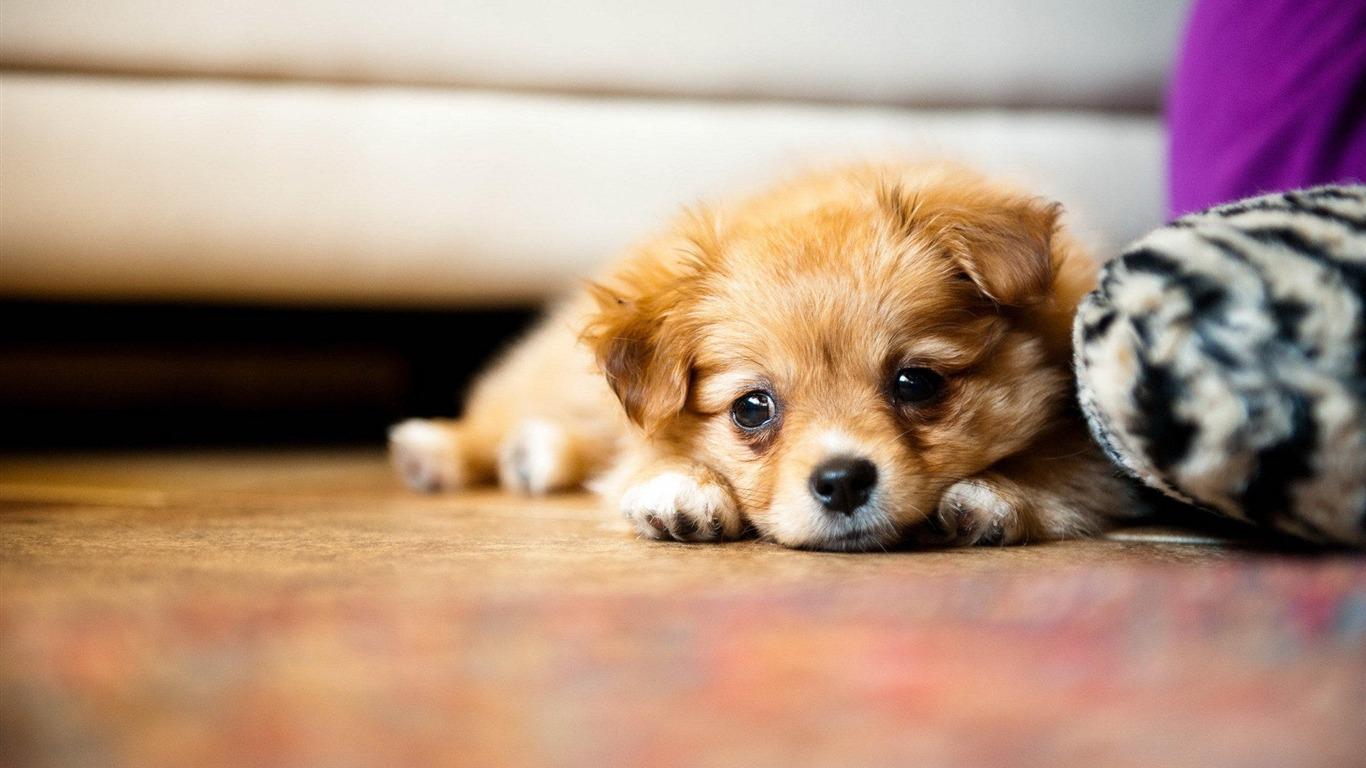 休憩中のかわいい子犬