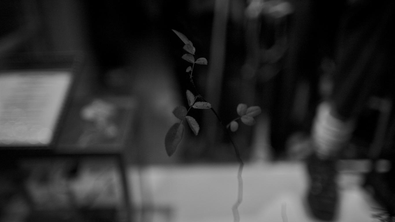 Vidro De Janela Preto E Branco Fotografia Da Vida Papel De