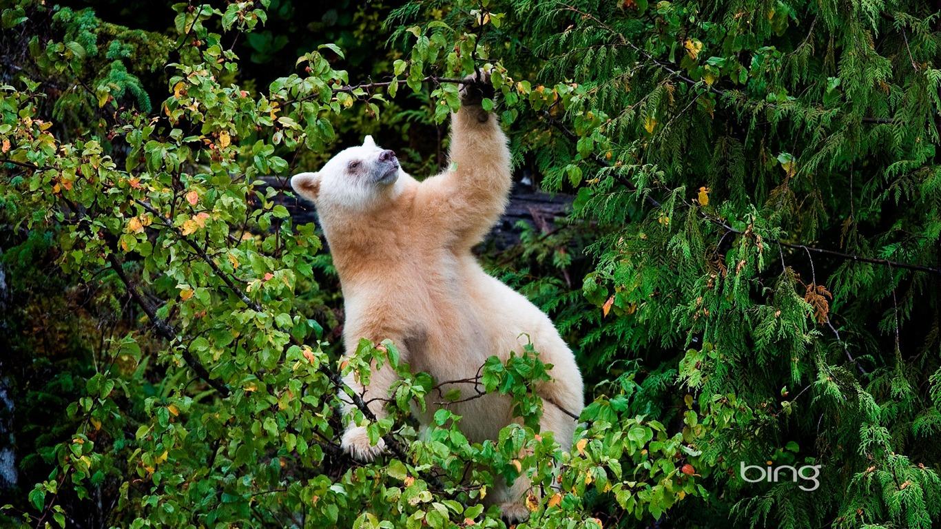 Jungle Polar Bear