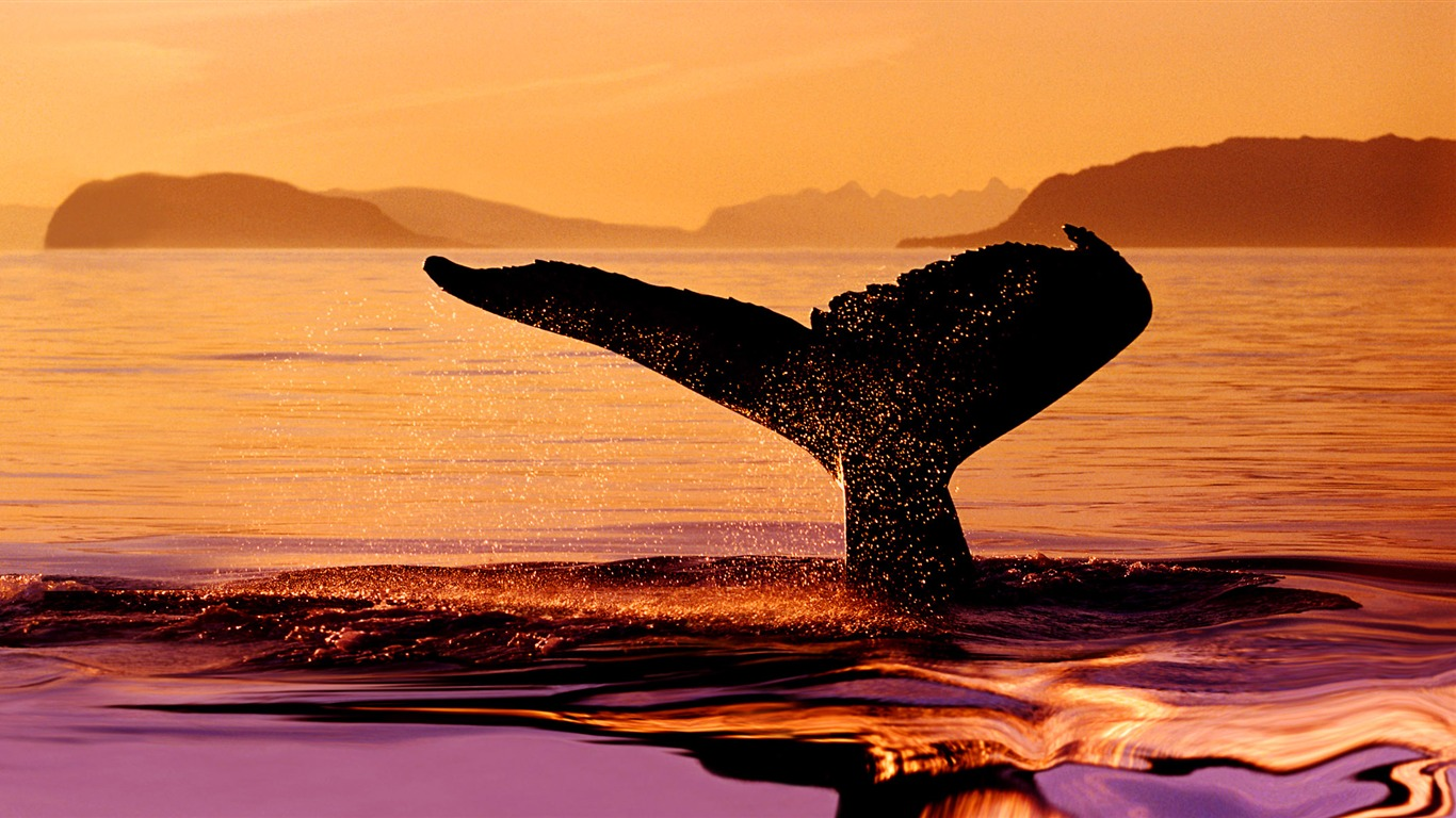 夕波とクジラの尾