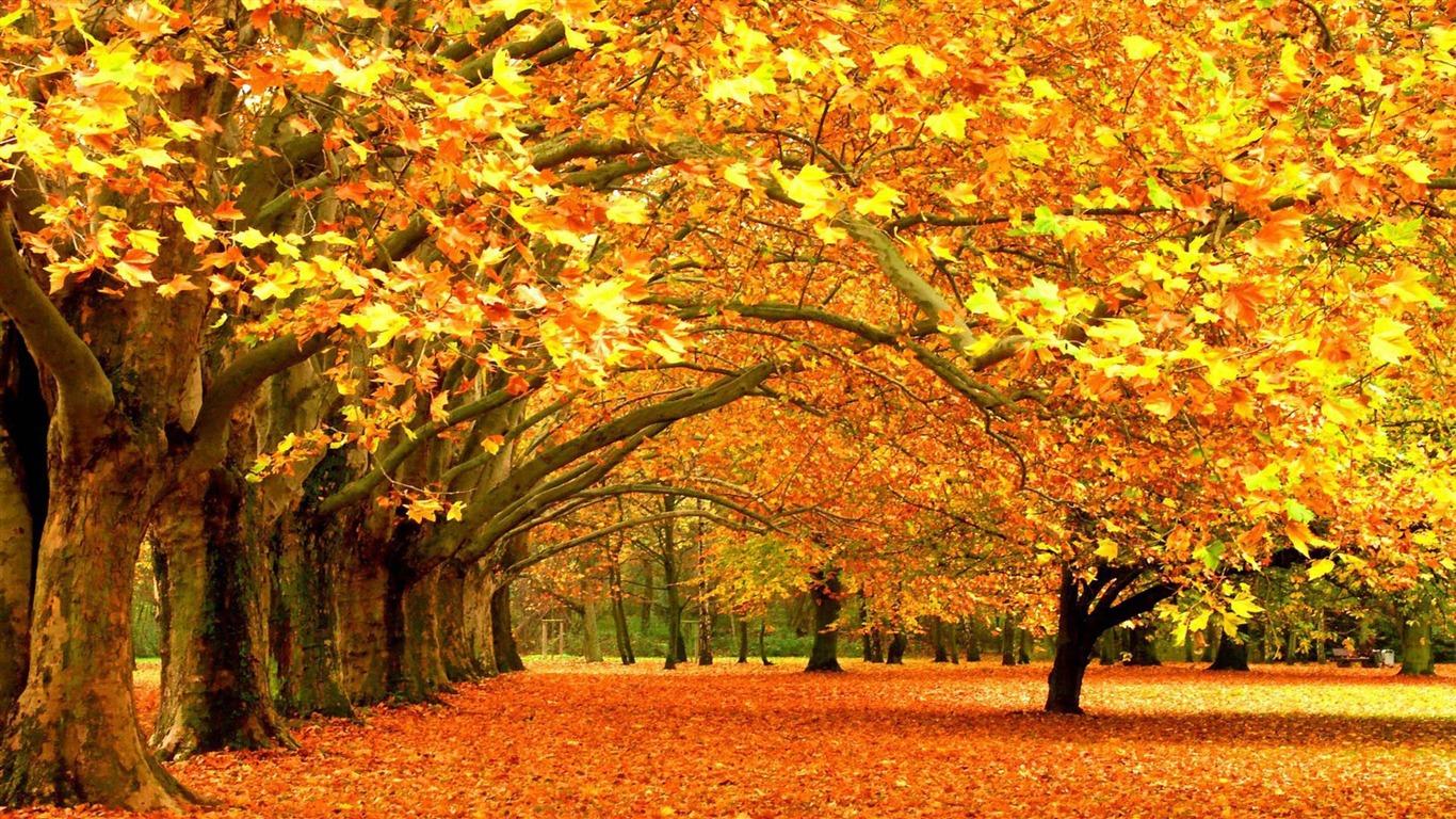公園で秋 風景のhdの壁紙プレビュー 10wallpaper Com