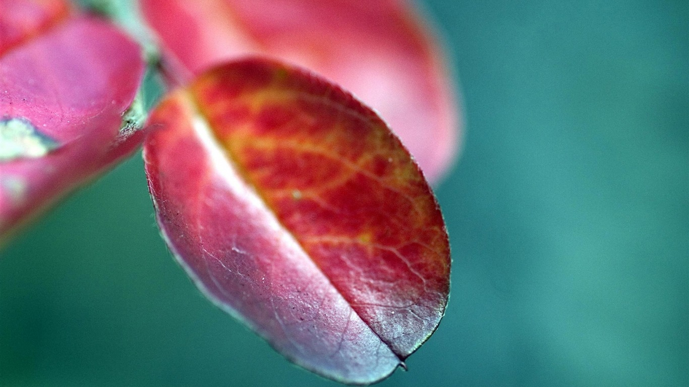 leaves_branches_blurring-Plants_Macro_wallpaper2013.10.11