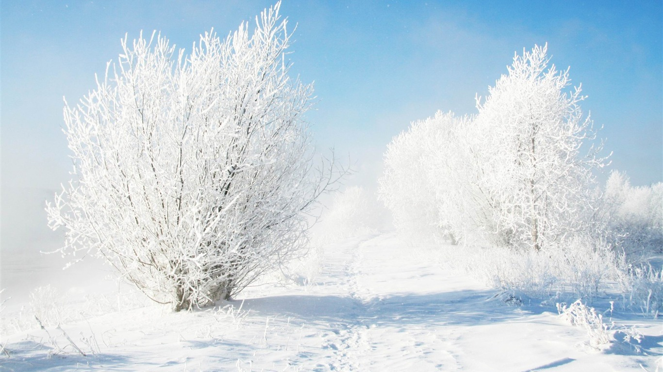 frozen_bushes-Landscape_HD_Wallpapers2013.12.19