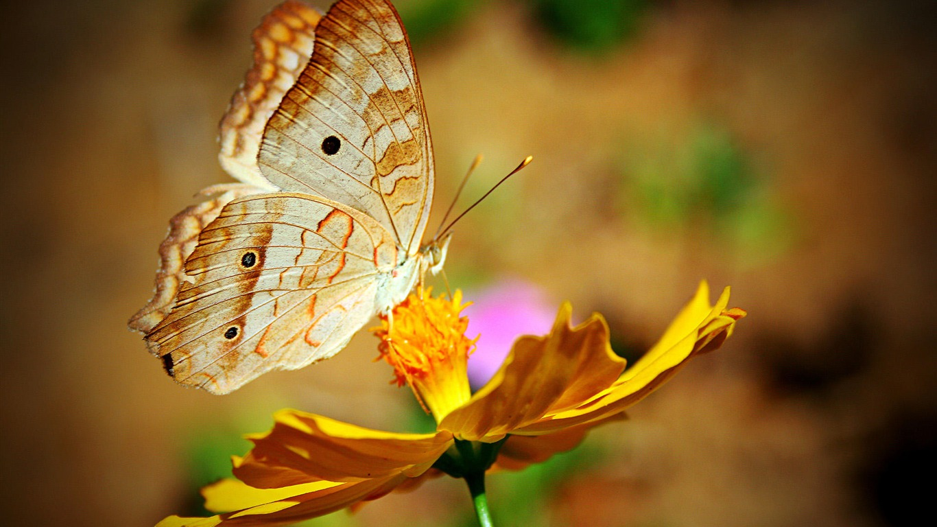 Butterfly_Flowers-Animal_Photo_Wallpaper2014.4.3