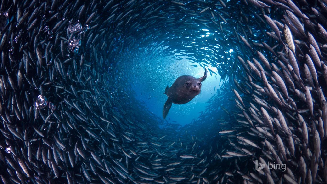 深海魚冰壁紙預覽 10wallpaper Com
