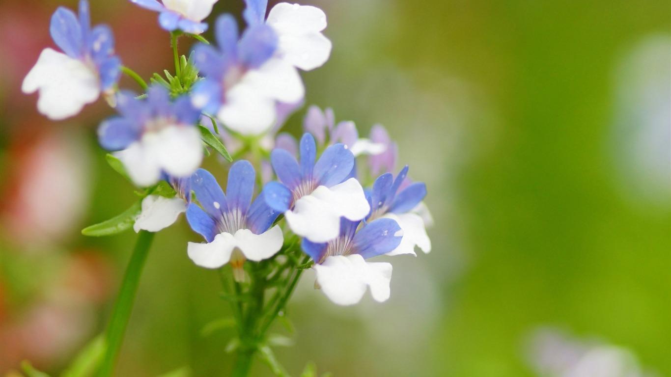 ボケ (植物)の画像 p1_32