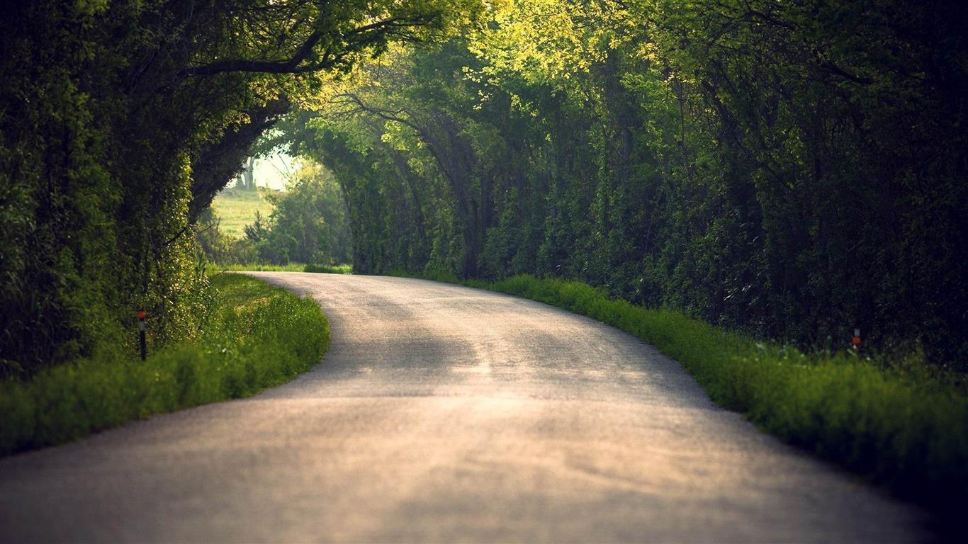木のアーチ道 自然写真の壁紙プレビュー 10wallpaper Com