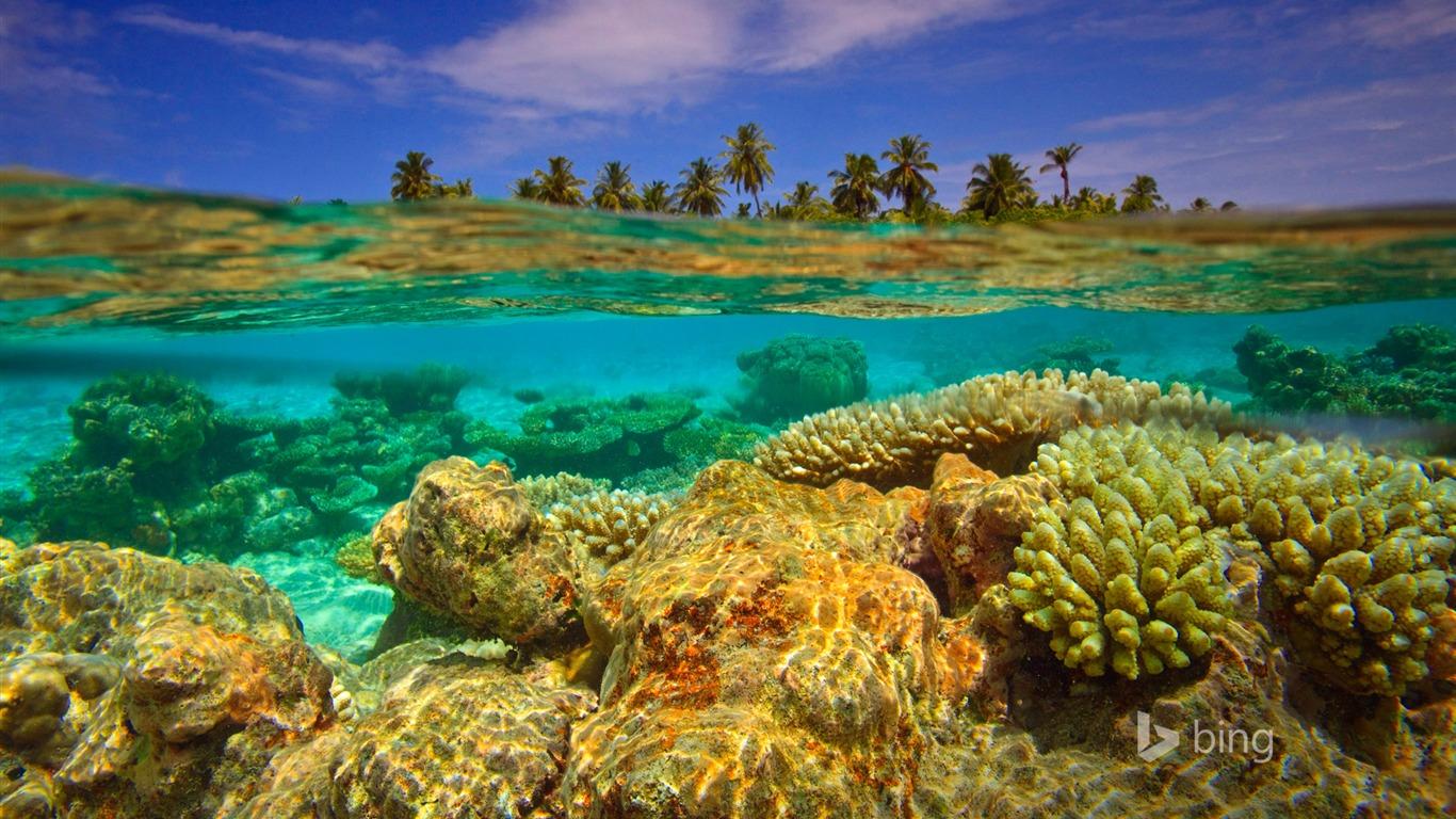 Fondo De Pantalla Submarino De Coral Bing Avance